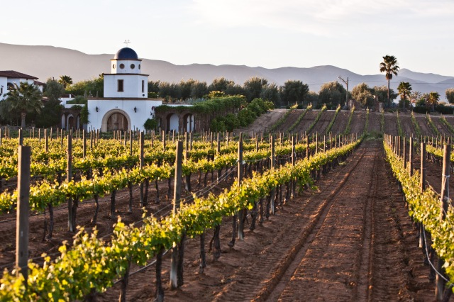 Adobe_guadalupe_winery_2